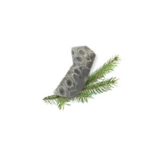 Petoskey Stone Chip B1