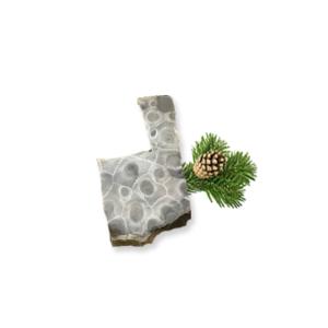 Petoskey Stone Chip D1