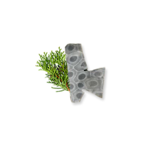 Petoskey Stone Chip Q1