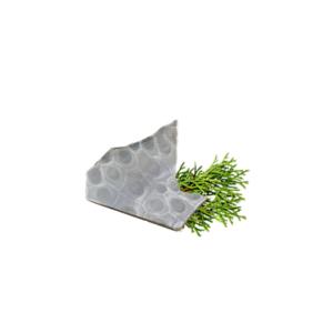 Petoskey Stone Chip I