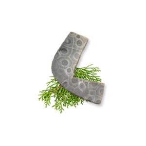 Petoskey Stone Chip H