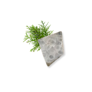 Petoskey Stone Chip Q 1