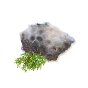 Petoskey Stone Slab B