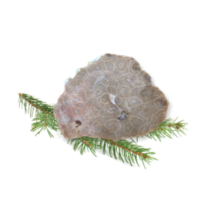 Petoskey Stone Slab C