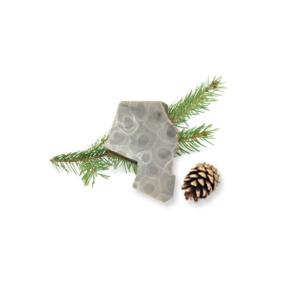 Petoskey Stone Chip M