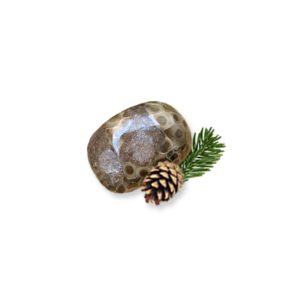 Small Polished Petoskey Stone T