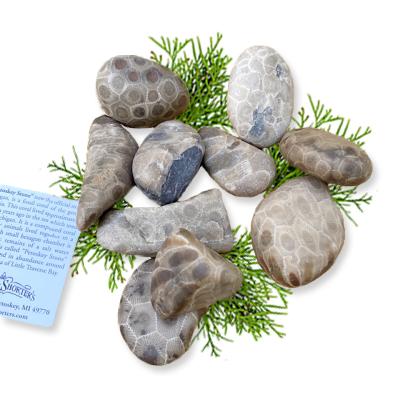 Bag of 10 Assorted Petoskey Stones