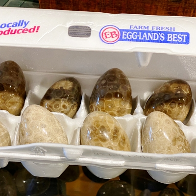 Egg Shaped Petoskey Stone H