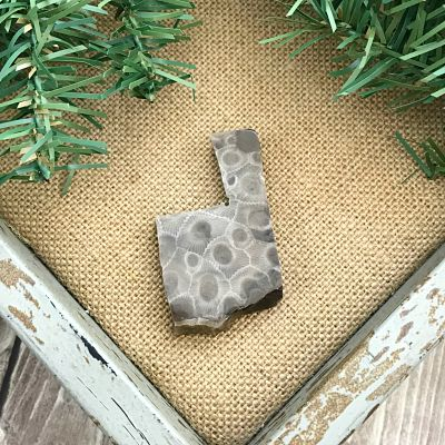 Petoskey Stone Chip D1