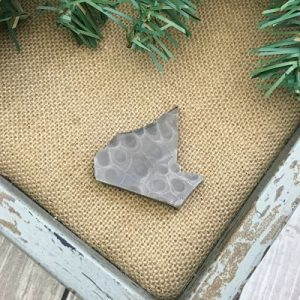 Petoskey Stone Chip I