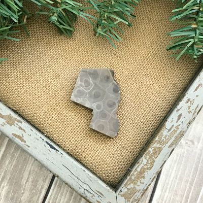 Petoskey Stone Chip M