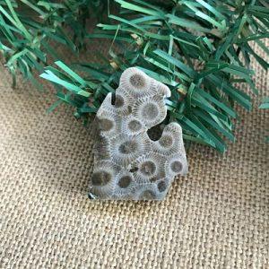 Small Lower Peninsula Petoskey Stone Magnet N