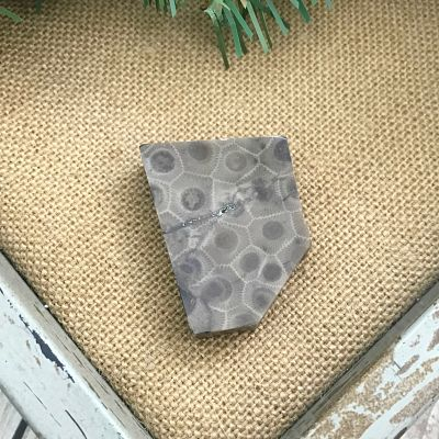 Petoskey Stone Chip K