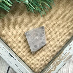 Petoskey Stone Chip Q