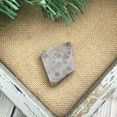 Petoskey Stone Chip Q