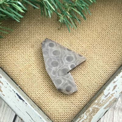 Petoskey Stone Chip W