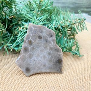 Petoskey Stone Slab E