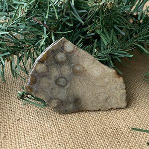 Petoskey Stone Slab H