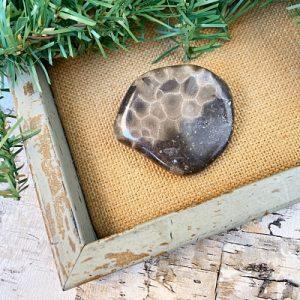 Small Polished Petoskey Stone B