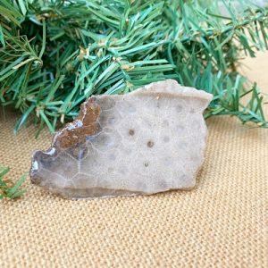 Petoskey Stone Slab F