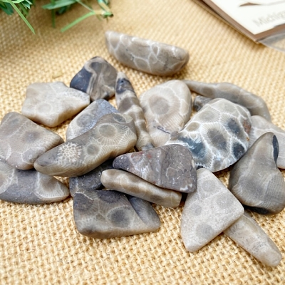 Package of Small Petoskey Stone Chips