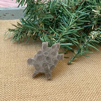 Turtle Petoskey Stone Magnet - D
