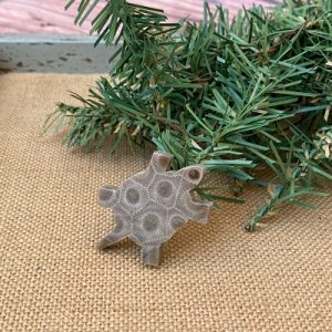 Turtle Petoskey Stone Magnet - F