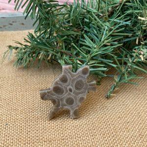 Turtle Petoskey Stone Magnet - J