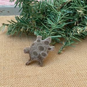 Turtle Petoskey Stone Magnet - K