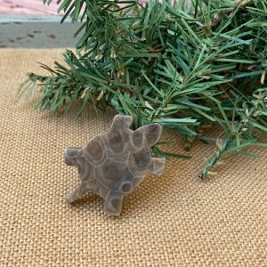 Turtle Petoskey Stone Magnet - M