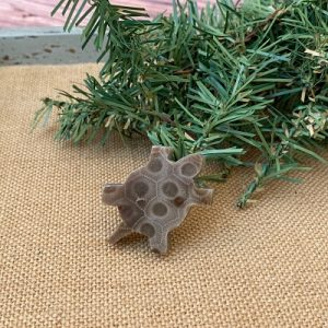 Turtle Petoskey Stone Magnet - N