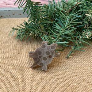 Turtle Petoskey Stone Magnet - O