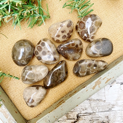 Assorted Petoskey Stones - 10 Piece