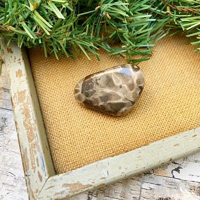 Small Polished Petoskey Stone H